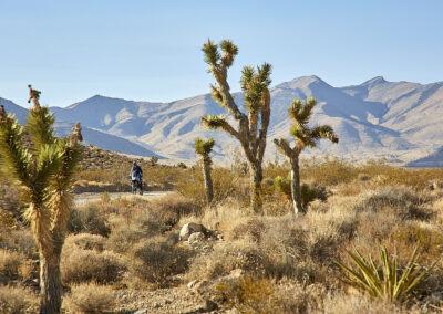 moto trails usa california